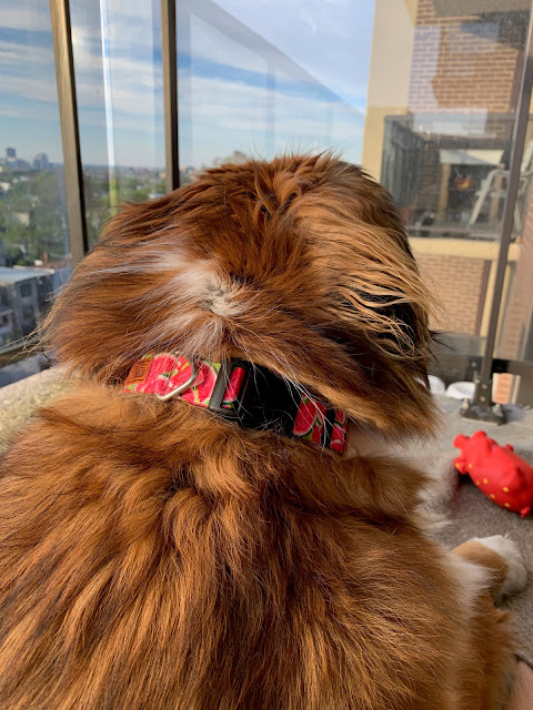 Paws For Reaction Product Review: Goobers Dog Collars are handmade in Canada