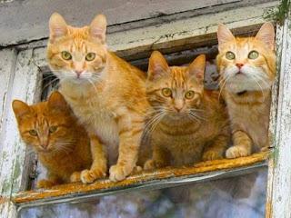 cara usir kucing