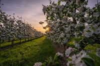Orchard - Photo by Pascal Debrunner on Unsplash