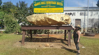 Northern Territory BIG Things | BIG Gold Nugget in Douglas Daly
