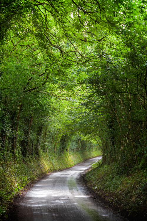 A tree tunnel covers a country lane in Exmoor National Park