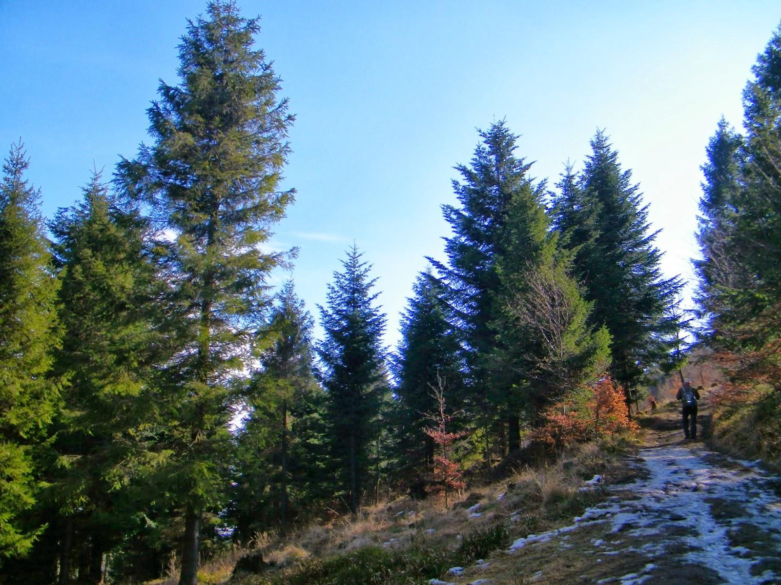Szlak z Przełęczy Przegibek