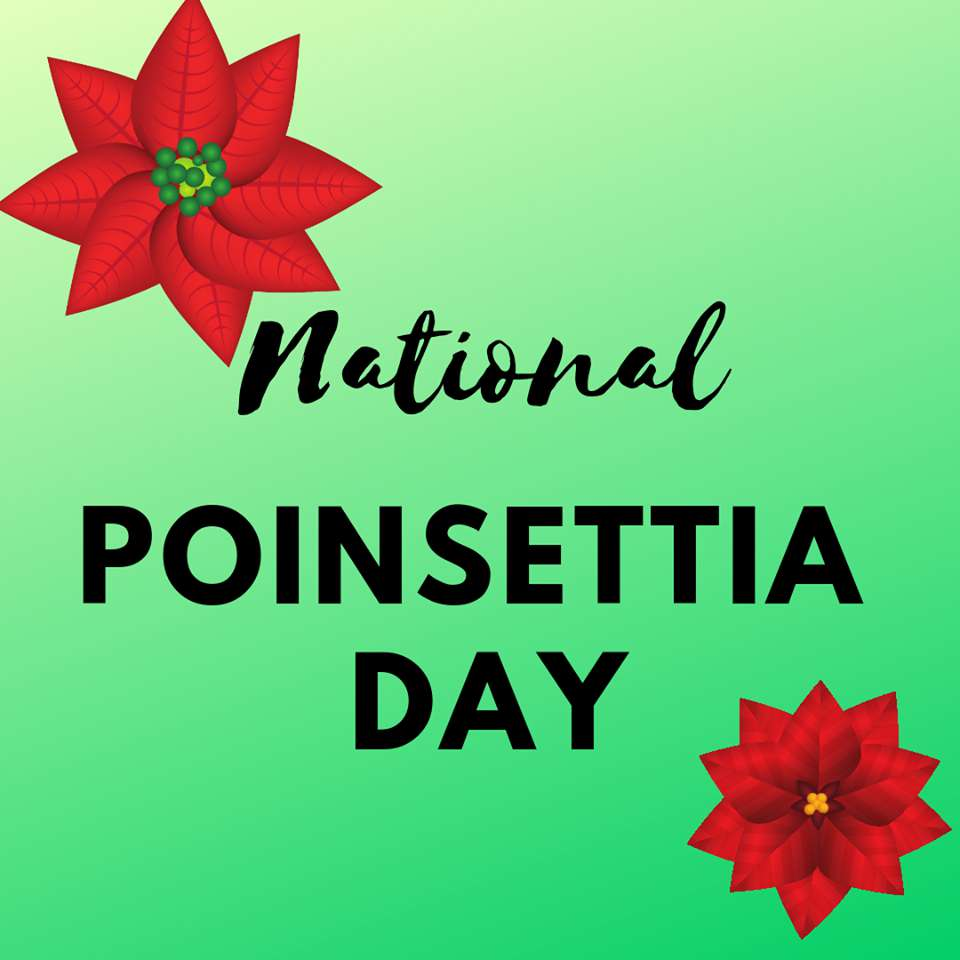 National Poinsettia Day Wishes Images download