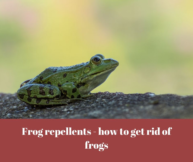 Frog repellents - how to get rid of frogs