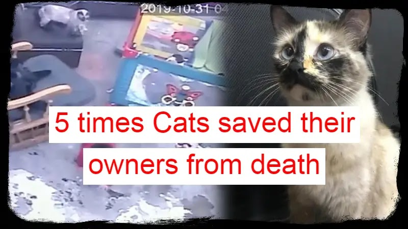 Cats saved their owners from death