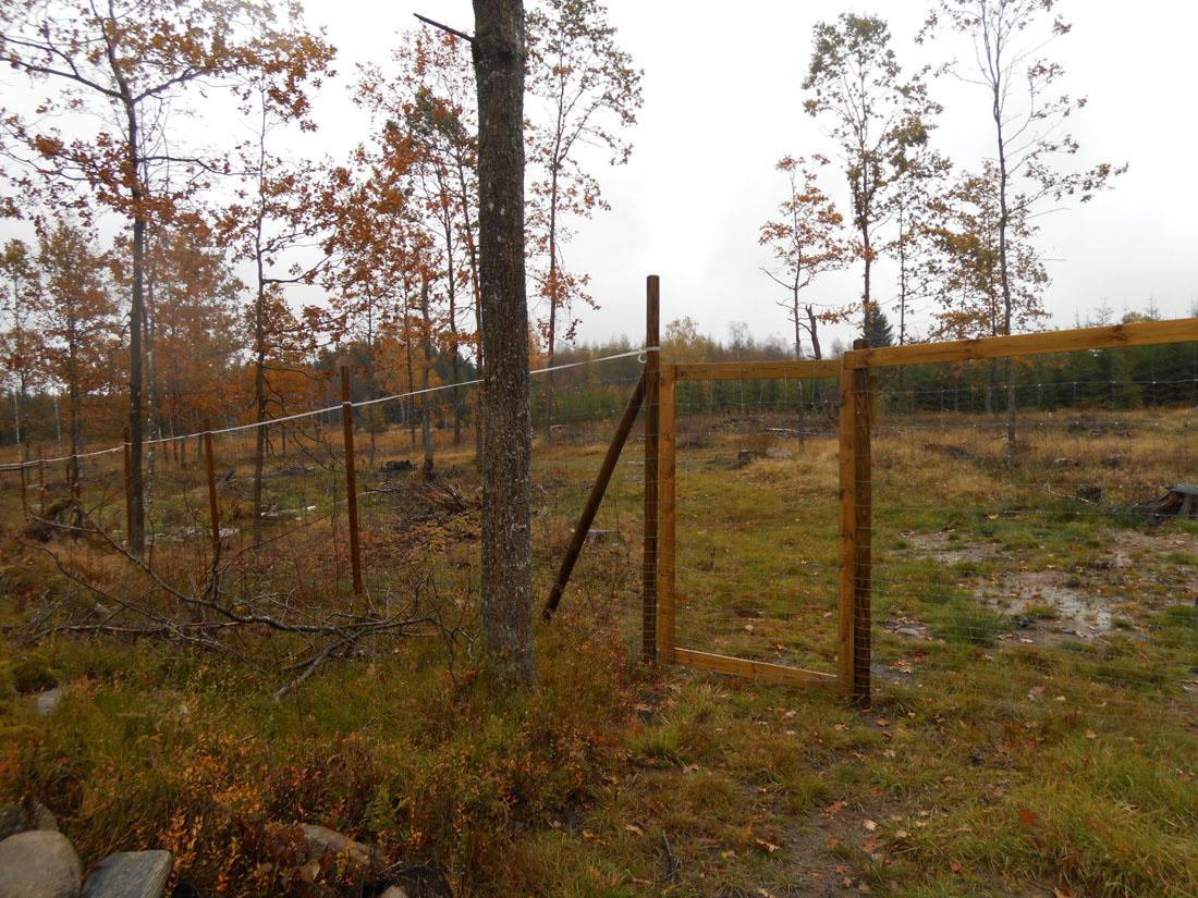 Controlli piantagioni di querce