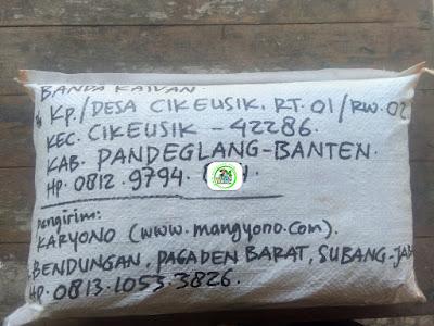 Benih padi yang dibeli    BANDA KAIVAN Pandeglang, Banten. (Setelah packing karung ).