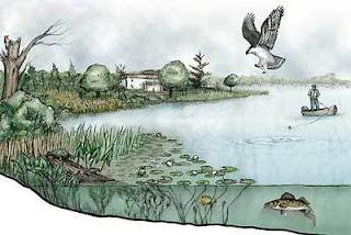 Faktor-Faktor Penyebab Terjadinya Keanekaragaman Flora Dan Fauna di Dunia