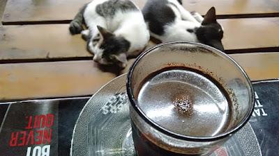 Kopi hitam dan anak kucing