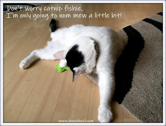 Friday Fluffers at BBHQ ©BionicBasil® Smooch's Fish'n'Nip
