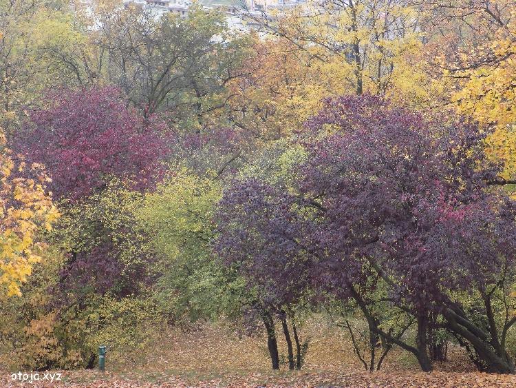 910670a051f80 Na poprawę nastroju zapraszam Cię na spacer alejkami praskich parków i  ekspozycję jesiennych barw. Moja galeria jest otwarta specjalnie dla Ciebie.