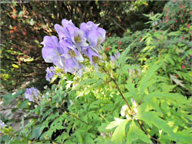 Flores del Shade Garden en el Jardín Botánico de Montreal