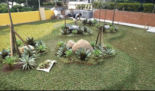 Jual Rumput Taman Gajah Mini Di Bogor Raya