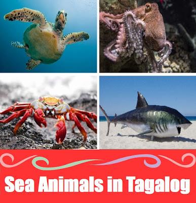 Sea Animal Names : Word List in Tagalog