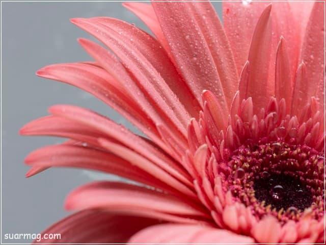 صور ورد - صورة ورد 3 | Flowers Photos - Roses Photo 3
