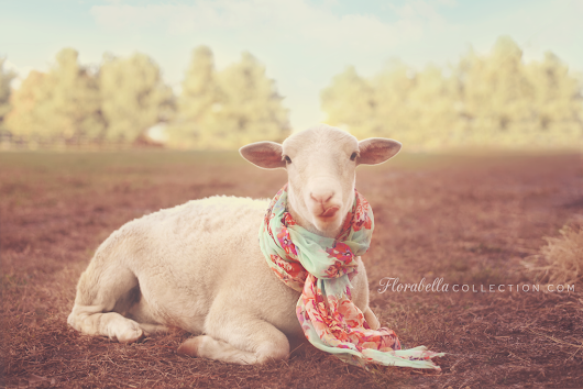Why yes, my sheep DOES accessorize!