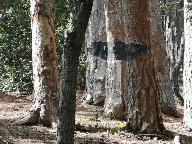 fredolic bosc pintat poblet