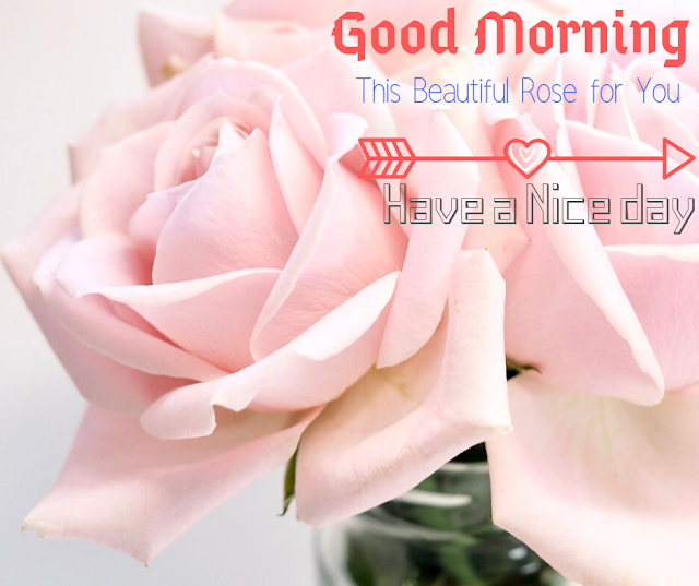 Good Morning Images with Rose Rose