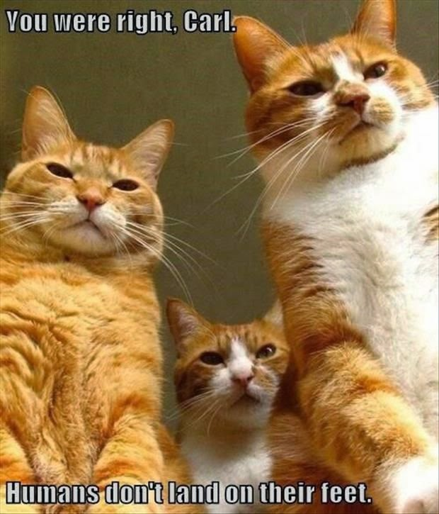 Funny Scary Gangster Cats Picture