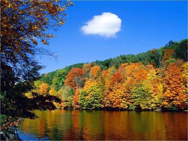 nehir kenarında sonbahar ormanı resmi