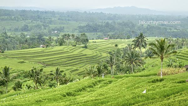 Las terrazas de arroz en Bali