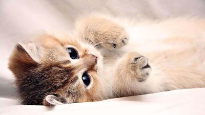 sleeping-cat-playingcat-photo