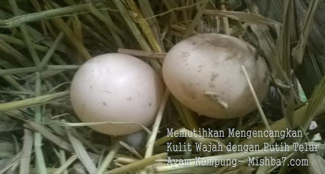 Memutihkan Mengencangkan Kulit Wajah dengan Putih Telur