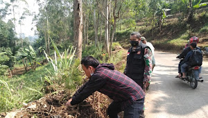 Pelaku Penebang Pohon Jalani Sanksi Yang Telah di Sepakati Dengan Dansektor 1 Beberapa Waktu Lalu