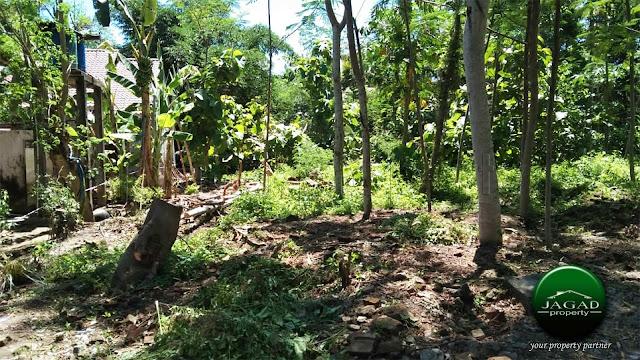 Tanah Pekarangan di Triharjo, Pandak