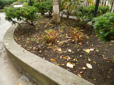 Garden District Toronto Fall Cleanup After by Paul Jung Gardening Services--a Toronto Organic Gardener