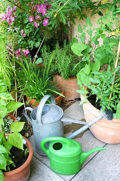 Gartensaison Ist Immer Gartentipps Von Eva Schumann Wenn Pflanzen