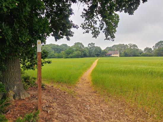 Walk 102: Benington NE Loop image by Hertfordshire Walker