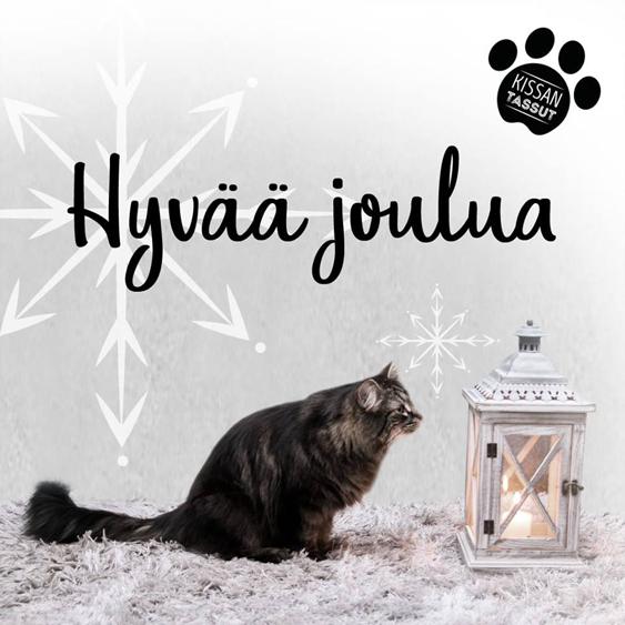 Hyvän joulun toivotus, jossa ruskea pitkäkarvainen kissa katselee harmaata lyhtyä.