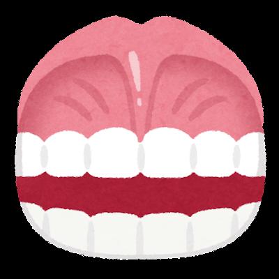 上唇小帯のイラスト