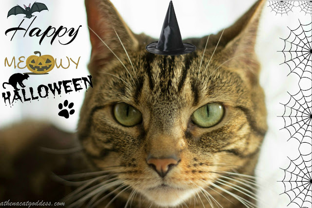 Caturday Art: Happy Meowy Halloween