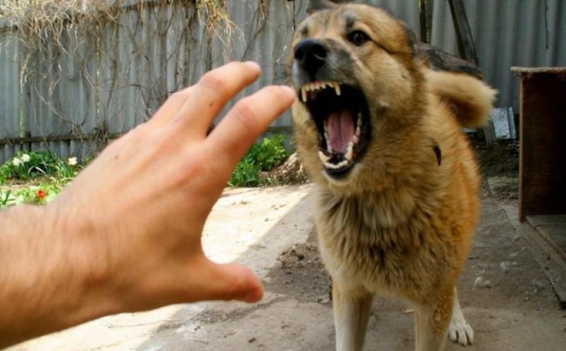 Bentuk Pertolongan Pertama Setelah Digigit Anjing Agar Tak Mematikan