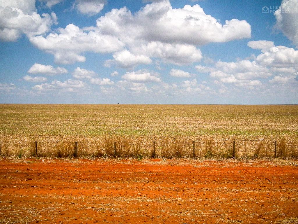 Monokultura soi w centralnej Brazylii