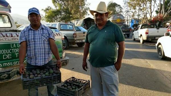 Oaxaqueños venden desde $20 veinte la CAJA de tomate, aguacate, pepino, ejote, y otros productos. DIFUNDE!!!