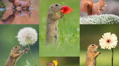 Flores, ardillas y otros animales con Dick van Duijn en Instagram