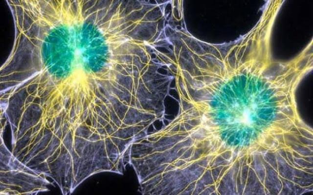 Невроните комуникират чрез Светлина