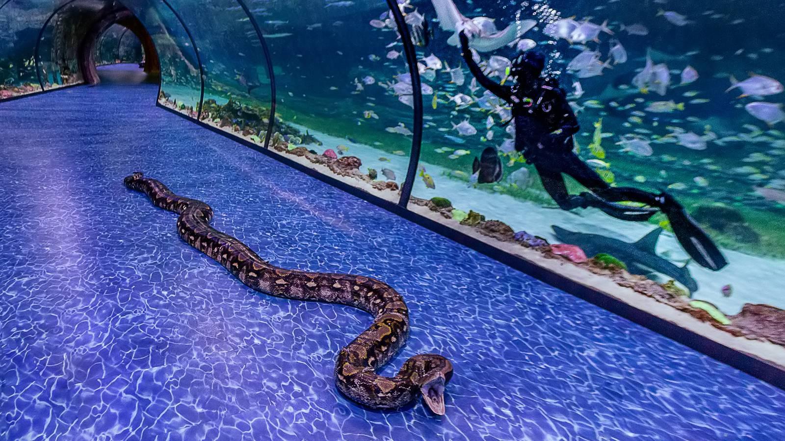 Al Qana Super Snake - New attraction of National Aquarium, Abu Dhabi