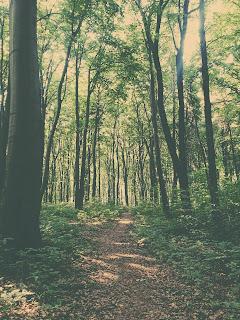 las w Czernej