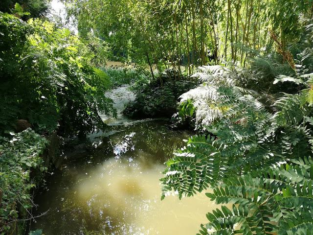 ogród wodny, ogród w cieniu, woda w ogrodzie