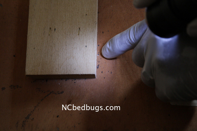 Dr Bed Bug Free Education Material On Bed Bugs Cimex Lectularius