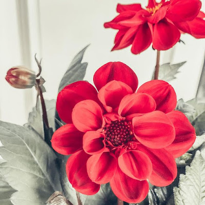 Red Flowers Aesthetic