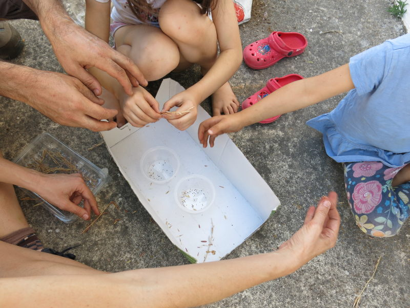 Recuperando semillas del Eco Huerto de la GFS AEA Bosque Animado