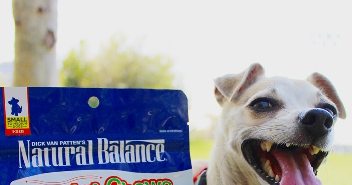 Easy Dog Friendly Hikes Oahu