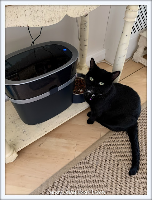 What's In The Box ©BionicBasil® Smart Feed Automatic Dog and Cat Feeder - As Modelled by Parsley
