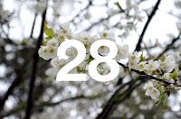 http://www.otchipotchi.com/2018/03/cherry-blossoms.html