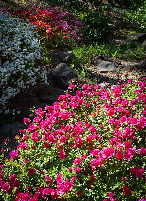 Frank A. Smith Memorial Garden | Photo: Travis Swann Taylor